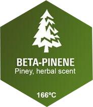Beta-Pinene Graphic