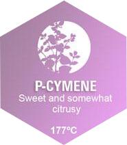 P-Cymene Graphic