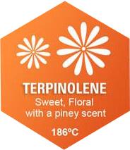 Terpinolene Graphic